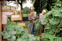 Turnips Triumph in Tower Hamlets - Good Life Express, Episode 20