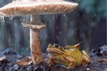 Our World: Sheltering frog